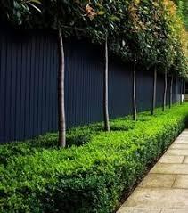 8 best landscape design plants images on pinterest back garden