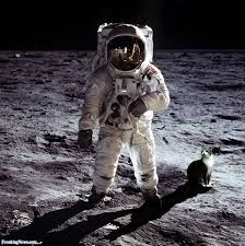 cats on the moon pictures