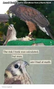 Hawkward Meme - pin by sophia rose on hilarious animal memes pinterest animal