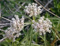 native ca plants top 25 native california plants u2013 call realty best palos verdes homes
