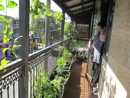 japanese edible balcony garden balmain sydney balcony garden