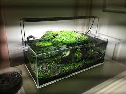 Aquascape Nj 197 Best Aquariums Images On Pinterest Aquariums Courtyards And