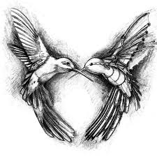 one of my favorite drawing art sketch hummingbird and
