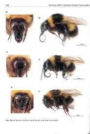 nz bumblebee conservation trust beekeeping new zealand
