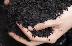 bbc gardening gardening guides techniques mulching plants