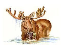 264 best moose images on pinterest moose moose art and plush