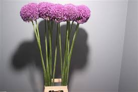 Wholesale Fresh Flowers Fresh Cut Flowers Metropolitan Wholesale