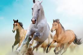 compare prices on running horse poster online shopping buy low