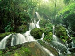 Black Forest Waterfall Window 1 Forest Waterfall Wallpapers 6947708