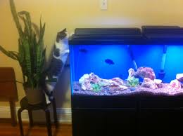 cuisine amazing aquarium home design home ideas decor gallery