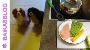cuisiner pour chien recette pour chien ration ménagère du débutant