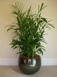 Plant Home Decor Bamboo House Plant Home U2014 Best Home Decor Ideas Fresh Look