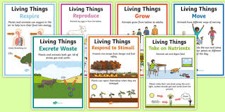 Characteristics Of Living Things Worksheet Middle Characteristics Of Living Things A4 Poster Set Science Year