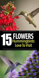 hummingbird flowers 15 flowers hummingbirds to visit