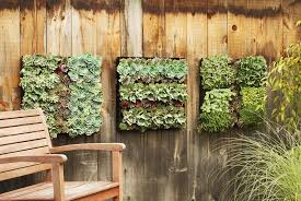 11 incredible ways to use indoor plants picture gallery dining