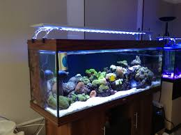 led aquarium lights for reef tanks best led lighting solution for your big saltwater tanks coolook