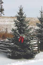 local christmas tree recycling programs natural awakenings