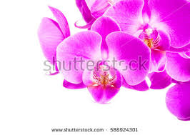 Flower Of Orchid - collection orchid flower isolated on whiteorchid stock photo