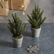 mini potted spruce tree set of 2 trees