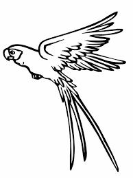 flying macaw coloring pages