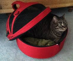 Sleepypod Mobile Pet Bed Best Cat Carrier My Top Four