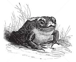 toad stock vectors illustrations and cliparts stockfresh