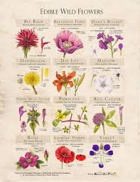 edible flowers edible flowers foraging feasting s essential info wondrous
