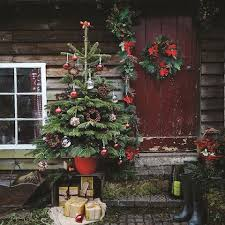 What Trees Are Christmas Trees - what to do with your christmas tree in january the telegraph