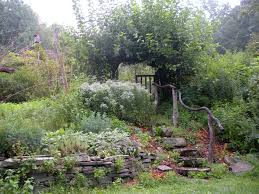 extraordinary small backyard orchard images inspiration amys office