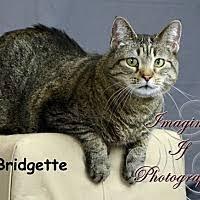 belgian sheepdog oklahoma oklahoma city ok pet adoption pet adoption and welfare