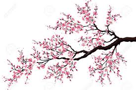 cherry tree stock photos royalty free business images
