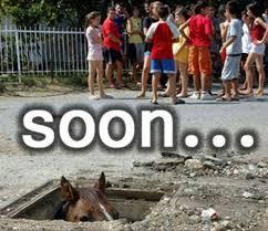 Soon Car Meme - soon horse viral viral videos