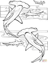 hammerhead shark coloring page free printable shark coloring pages