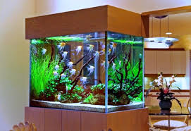 Betta Fish Decorations Best Aquarium Decorating Aquarium Design Pinterest Aquariums
