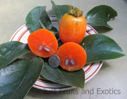 Persimmon Flower - russian kaki persimmon tree just fruits and exotics