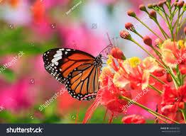 butterflies flowers stock photo 542026162