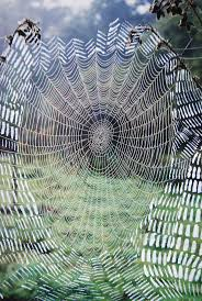 how to make a spider web for halloween best 25 spider webs ideas on pinterest morning dew macro