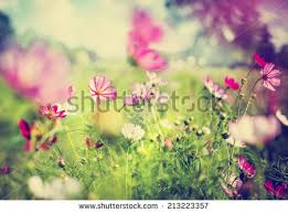 vintage bicycle flowers on summer landscape stock photo 281101136