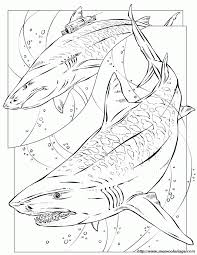 dk coloring pages megalodon coloring pages coloring home
