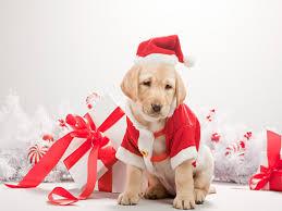 dog christmas dog christmas pictures wallpapers9