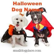 Female Dog Halloween Costumes Dog Names