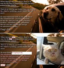 Dog Cat Meme - cats and dogs are different hilarious funny babamail