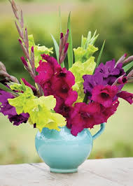 gladiolus flower how to plant and grow gladioli