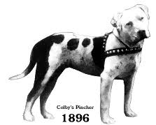 colby american pitbull terrier the real apbt famous pit bulldogs