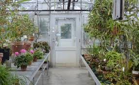 plants native to indiana 6 things you didn u0027t know about the jordan greenhouses limestone