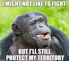 Gorilla Warfare Meme - do animals have wars like humans do science abc