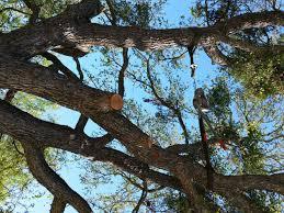 how to repair split trees daddykirbs farm