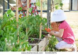 planting vegetables stock images royalty free images u0026 vectors