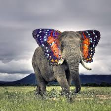 butterfly ears elephant photoshopped image
