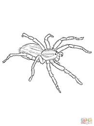 spider coloring page chuckbutt com